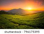 tea farm in cameron highland on ... | Shutterstock . vector #796175395