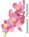 Pink Orchid Flowers Isolated...