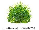 green bush isolated on white... | Shutterstock . vector #796209964