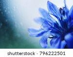 Blue Flower Close Up....