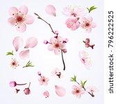 vector collection sakura... | Shutterstock .eps vector #796222525