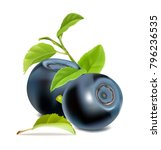 blueberries with leaves. vector ... | Shutterstock .eps vector #796236535