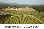 oil palm plantation ... | Shutterstock . vector #796251154