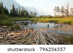 Dead Wood At Marsh Pond On The...