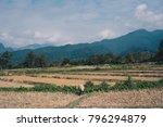thai buffalo in dry rice field... | Shutterstock . vector #796294879