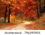 Walk On The Autumn Road Forest