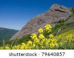 Yellow flowers on mountain background - stock photo