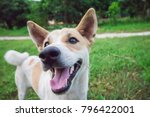 Stock photo dog on a green grass outdoors 796422001