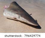 western australia  reef shark... | Shutterstock . vector #796429774