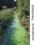 Small photo of Algal bloom due to water pollution