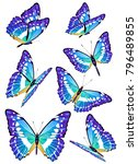 blue butterflies set  | Shutterstock . vector #796489855