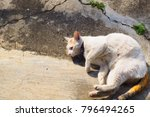 white cat with yellow eye  ... | Shutterstock . vector #796494265