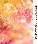closeup of beautiful autumn... | Shutterstock . vector #796494631