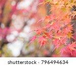 closeup of beautiful autumn... | Shutterstock . vector #796494634