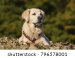 dog lying on meadow | Shutterstock . vector #796578001