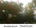 Yellow And Green Foliage With...