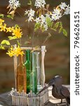 Small photo of Amelanchier and Forsythia in glass vases as decoration