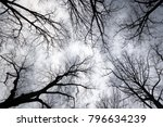 looking up to grey sky through... | Shutterstock . vector #796634239