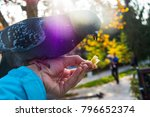 pigeons. a girl is feeding...   Shutterstock . vector #796652374