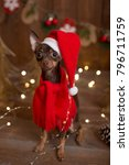 dog russian toy terrier.... | Shutterstock . vector #796711759