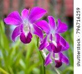 image of beautiful purple...   Shutterstock . vector #796716259