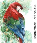 Parrot Macaw Red Green Blue...