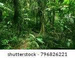 lush green foliage in tropical... | Shutterstock . vector #796826221