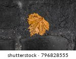 Fallen Autumn Leaf On Wet And...