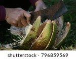 coconut peels in close proximity | Shutterstock . vector #796859569