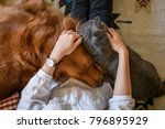 Stock photo hug the cat and the dog 796895929