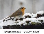european robin  erithacus... | Shutterstock . vector #796945225