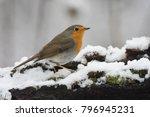 european robin  erithacus... | Shutterstock . vector #796945231