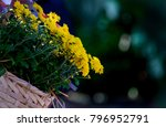 yellow autumnal chrysanthemum
