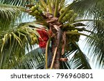 coconut gardener in thailand   Shutterstock . vector #796960801