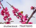 chestnut flanked white eye ... | Shutterstock . vector #796970095