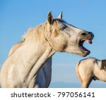 funny portrait of a laughing... | Shutterstock . vector #797056141