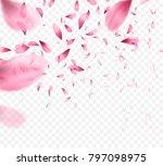pink sakura falling petals... | Shutterstock .eps vector #797098975