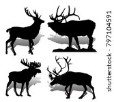 collection forest animals ... | Shutterstock .eps vector #797104591