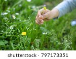a child hand grabing a yellow... | Shutterstock . vector #797173351