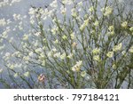 double exposure of a tree with...   Shutterstock . vector #797184121