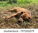 Dog Sleeping On The Grass