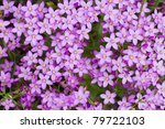 close up view of the beautiful... | Shutterstock . vector #79722103