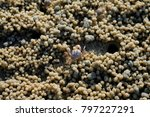 crab hole or crab hole image... | Shutterstock . vector #797227291