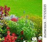 summer flower bed and green... | Shutterstock . vector #797252035