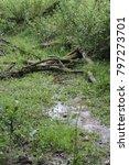 tree branches fallen over a... | Shutterstock . vector #797273701