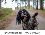 Stock photo the wet dog gives his paw happy dirty dog in the wood 797349634