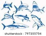 Graphical Set Of Blue Sharks ...