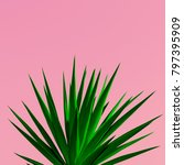 plant on pink. plant lovers.... | Shutterstock . vector #797395909