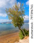 Small photo of Green pine tree and crystal clear turquoise sea water of a beach in Adamas on Milos island