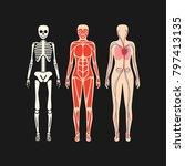 human body anatomy detail... | Shutterstock .eps vector #797413135